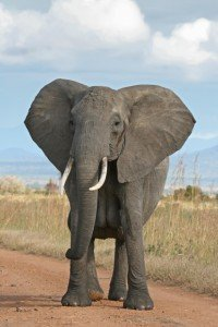 Is cybersecurity the elephant in your boardroom?